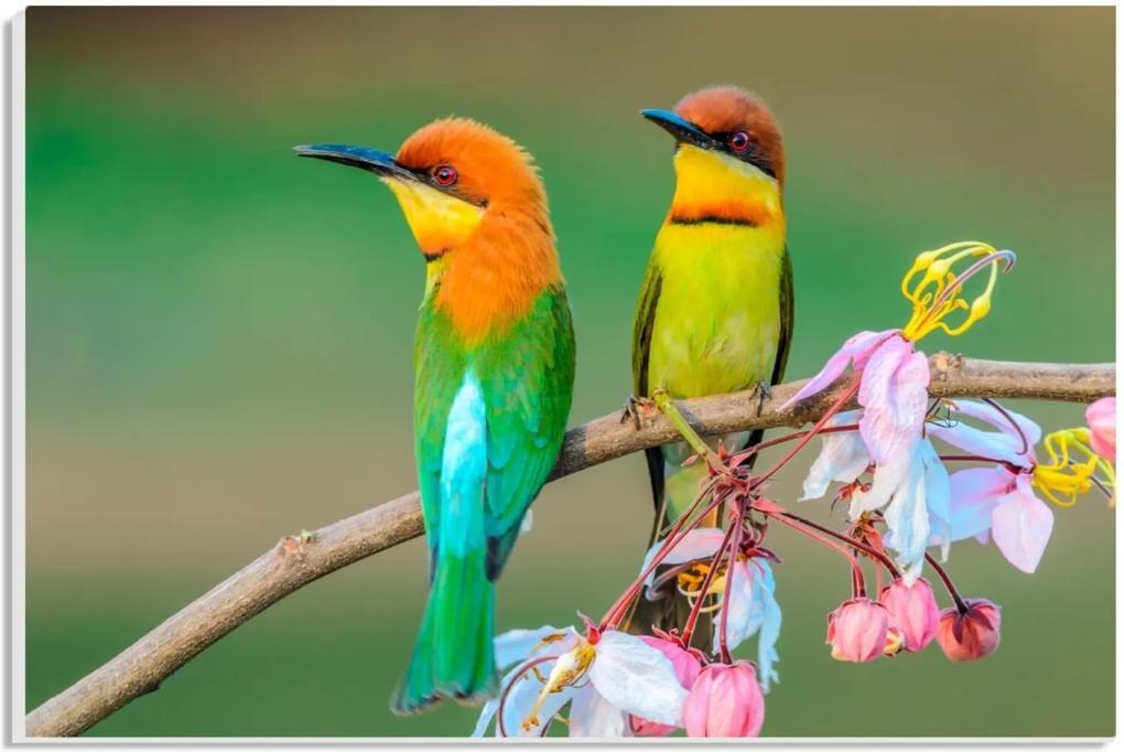Placa de Bancada Pump UP Decorativa Pássaros 20x30 cm Verde