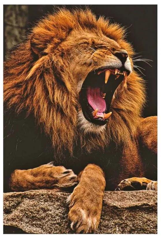 Quadro Decorativo Leão Selvagem - KF 48747 40x60 (Moldura 520)