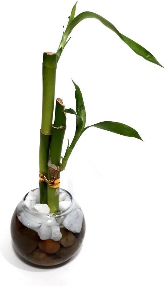 Vasinho de Redondo com Dois Bambus da Sorte (Lucky Bamboo)