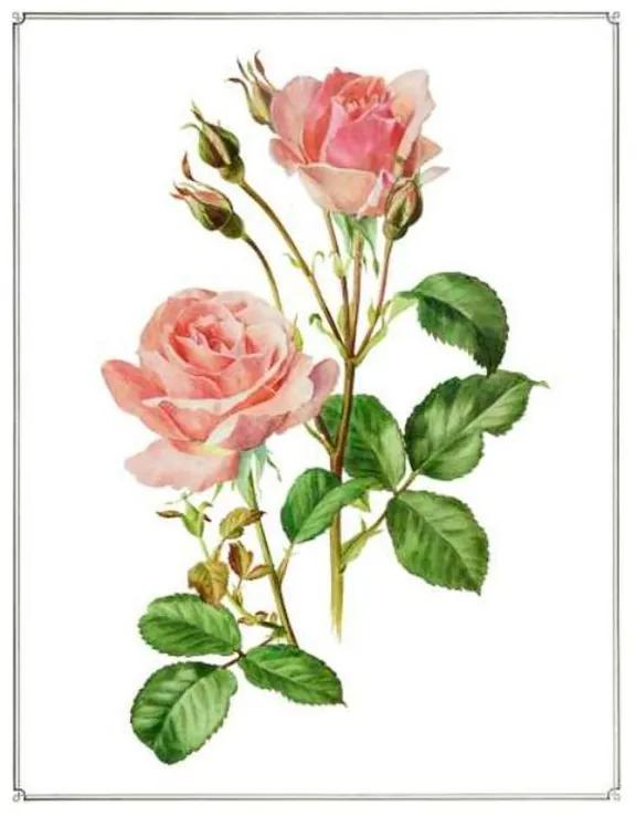 Quadro Decorativo Rosas - KF 49206 40x60 (Moldura 520)