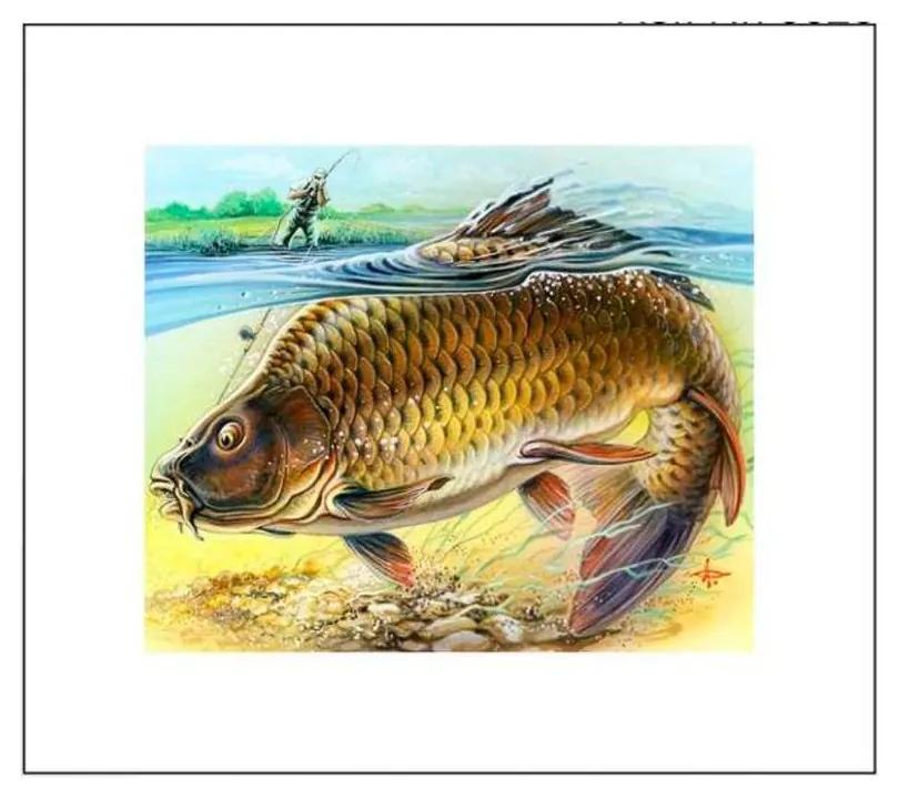Quadro Decorativo Peixe Dourado - KF 48774 40x60 (Moldura 520)