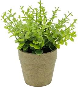 Mini Vaso Papel Sedum Sucullent Verde 15X15X16,5Cm Urban