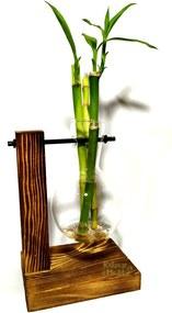 Suporte em Madeira e Vaso Pendente com Bambu da Sorte (3 Hastes)