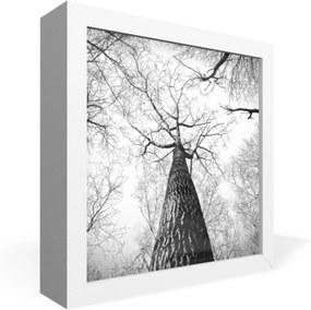 Quadro Adoraria Caixa Frontal Arvore natureza Branco