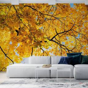 Painel fotográfico folhas amarelas