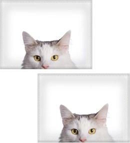 Jogo americano Colours Creative Photo Decor - Gato branco - 2 peças