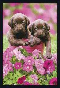 Quadro Decorativo Poster Filhotes Cachorros Marrons 60x90cm