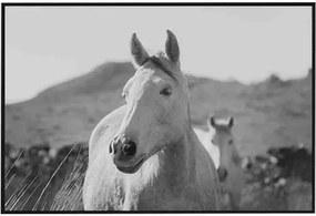 Tela em Canvas - Horse P&B - 200x100cm - Moldura Preta  Kleiner Schein