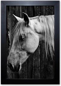 Pôster Decorativo Prolab Gift Cavalo Moldura Preta