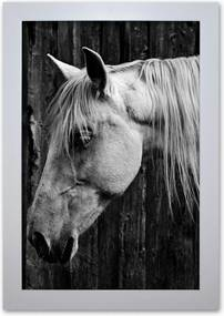 Pôster Decorativo Prolab Gift Cavalo Moldura Branca