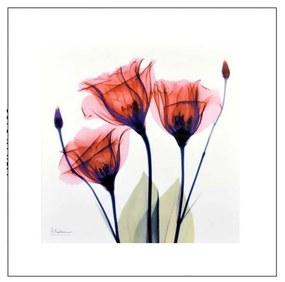 Quadro Decorativo Flores Delicadas - KF 50118 30x30 (Moldura 520)