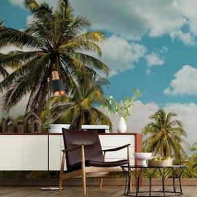 Painel fotográfico céu azul com palmeiras