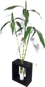 Vaso em Vidro e Suporte de Madeira Médio com 3 Hastes de Bambu da Sorte
