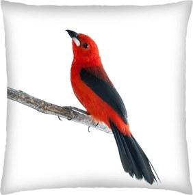 Almofada Colours Creative Photo Decor Pássaro vermelho - tamanho 45 x 45 cm Branco