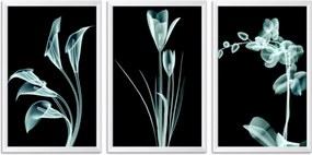 Quadro Oppen House    60x120cm Flores Abstrato Transparentes Moldura Branca Estilo Raio  x Decorativo Interiores Mod:OH0020