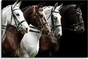 Tela Decorativa Estilo Fotografia Cavalos Encilhados - Tamanho: 60x90cm (A-L) Unico