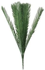 Palmeira cica