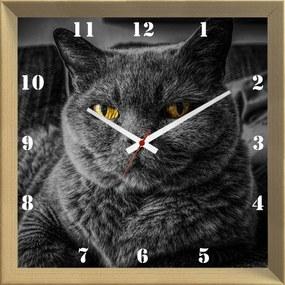 Relógio de Parede Criativo Pet Gato Cinza Chartreux de Olhos Amarelos 30x30cm