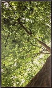 Tela Primavera I em Canvas - 50x70cm - Moldura Imbuia  Kleiner Schein